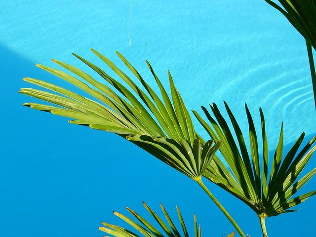 listy palmy u bazénu