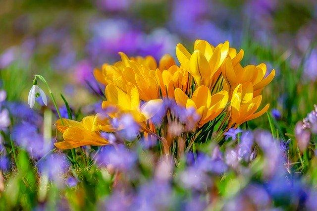 Jarní cibuloviny
